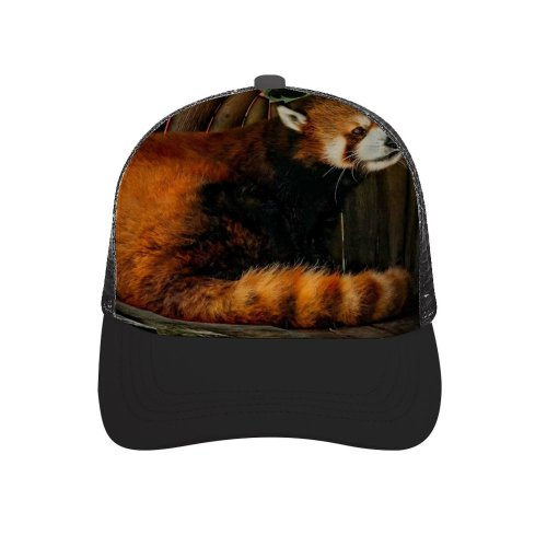 yanfind Adult Bend Rubber Baseball Hollow Out Pet Wallpapers Pictures Panda Cat Images Wood Roux Free Wildlife Lesser Beach,Tourism,Mountaineering,Sports, Parties,Cycling