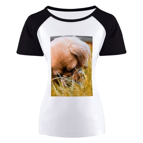 yanfind Women's Sleeve Raglan T Shirt Short Adorable Cute Depth Field Dog Focus Fur Furry Grass Pet Pup