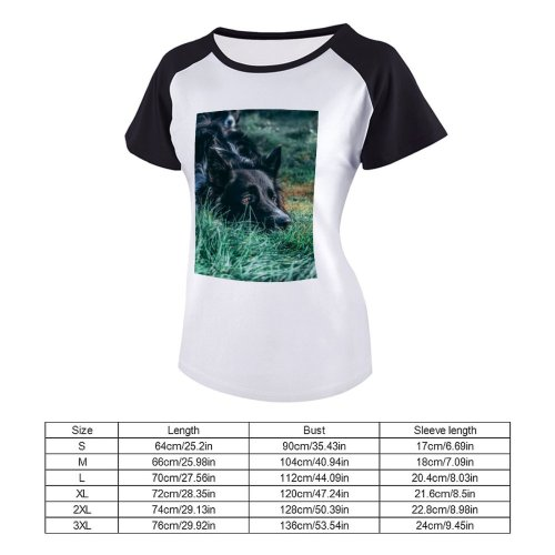 yanfind Women's Sleeve Raglan T Shirt Short Adorable Border Collie Cute Dog Grass Ireland Northern Pet Puppy