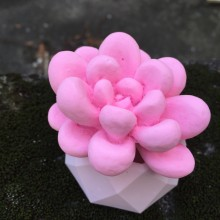 BK1138 Succulent Plants Silicone Mold DIY Aroma Gypsum Plaster Silicon Mould Candle Molds